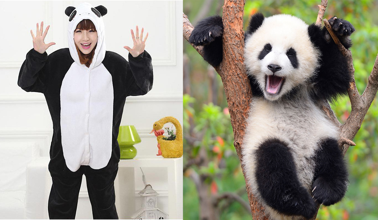 Découvrez pourquoi le kigurumi panda suscite un engouement croissant auprès du public.